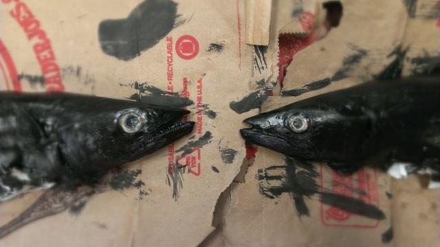fish.prints.8